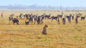 Maputo - Beira - Gorongosa National Park  Day Tour Packages
